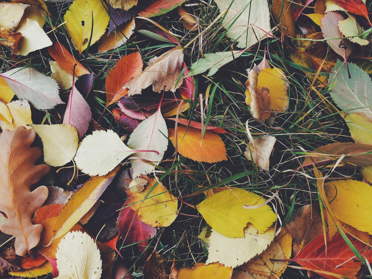 an image of colourful leaves sitting upon grass