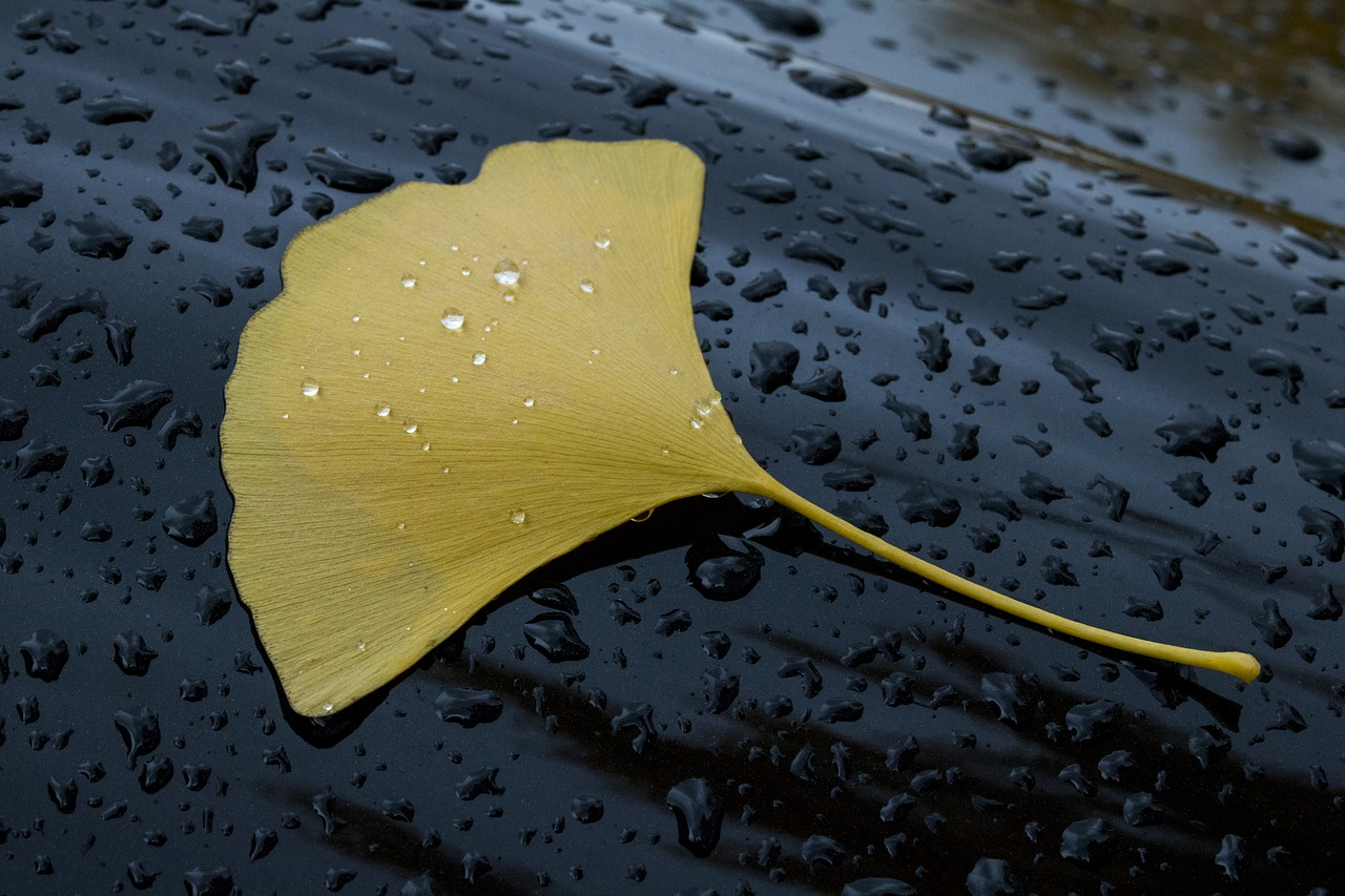 A close up of a leaf in the gutter