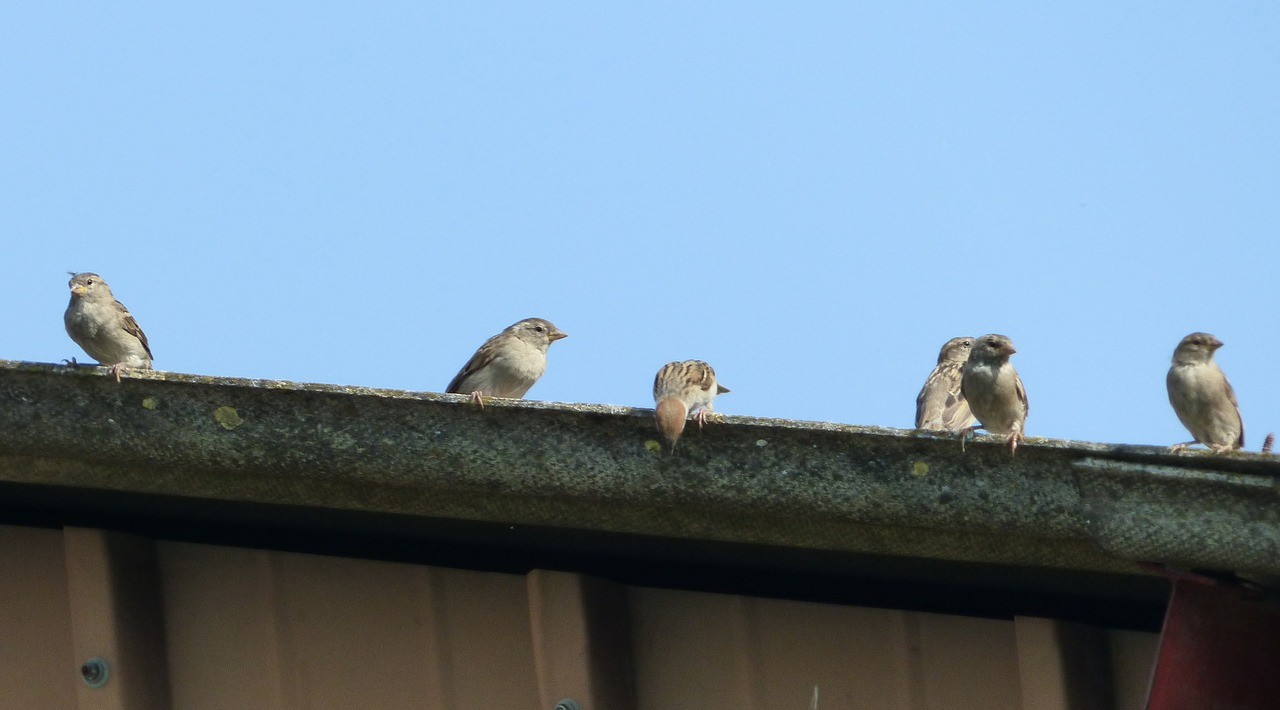 An image of birds sitting atop a gutter.